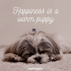 Warm Puppy | World Animal Day Quotes