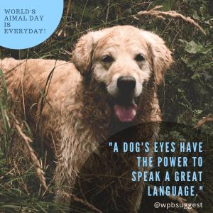 Dog Love   Happy Animal Day