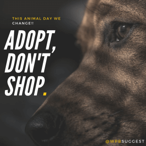 World Animal Day Quotes & Images 2019 | Whatsapp & Instagram ...