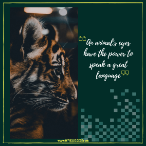 Save Tigers | Animal Day Quotes