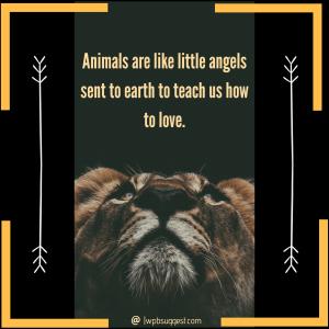 World Animal Day   Save Tigers