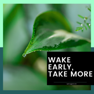 Wake Up Early Sayings Image